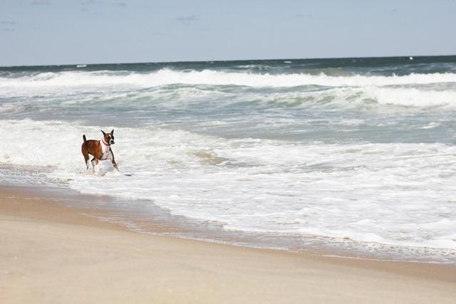 Beach-64