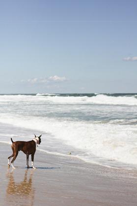 Beach-65
