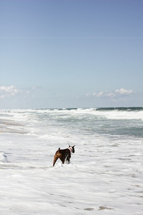 Beach-66