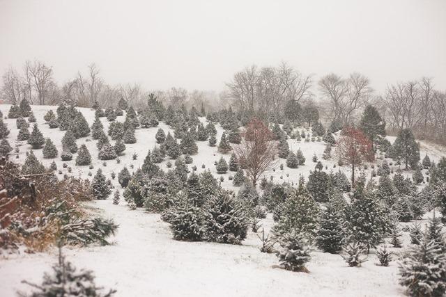 December-4