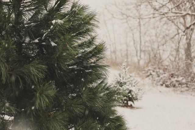 December-9