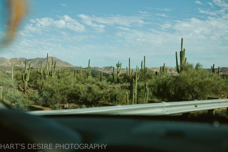 Arizona-118