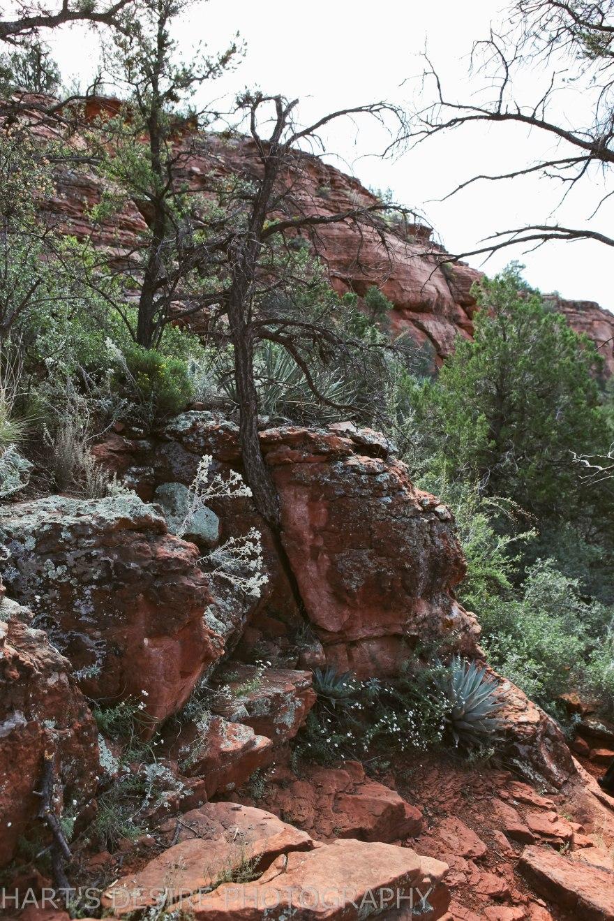 Arizona-66